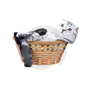 The Kitten  Lies In A Basket. Stock Image - Image: 7817031