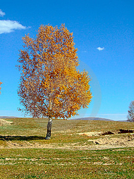 A Tree In Plain Stock Photography - Image: 7819132