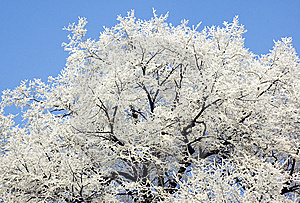 Frozen Tree Stock Photo - Image: 7820720