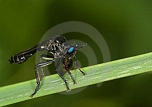 Blue Eyes Royalty Free Stock Photo - Image: 7822175