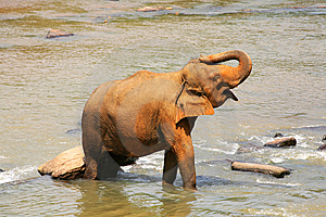 Elephant Royalty Free Stock Photos - Image: 7822258