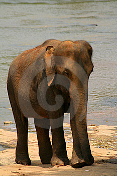 Elephant Stock Photography - Image: 7826332
