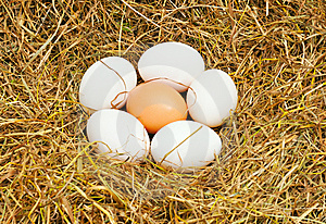 Six Eggs Royalty Free Stock Photos - Image: 7827528