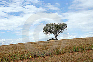 Alentejo Royalty Free Stock Photography - Image: 7827607