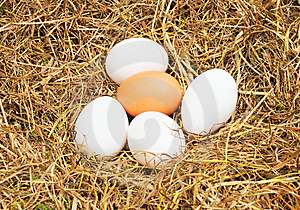 Few Eggs Stock Image - Image: 7828051