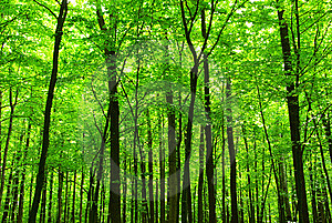 Forest Stock Photos - Image: 7829573