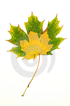Two Fallen Leaves Royalty Free Stock Photo - Image: 7831205