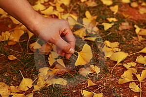 Leaves Everywhere Stock Images - Image: 7833964