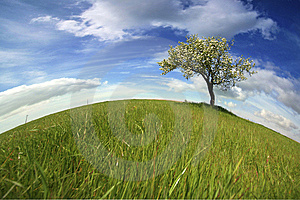 Beautiful spring landscape with lonely tree Free Stock Photography