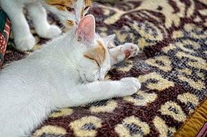 Sleeping Kitty Stock Photos - Image: 7834623