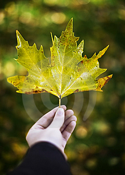 Man Holding Leaf Royalty Free Stock Photo - Image: 7836355
