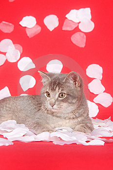 Kitten And Rose Petals Royalty Free Stock Image - Image: 7836506