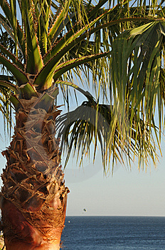 Palm Tree Royalty Free Stock Photos - Image: 7838348