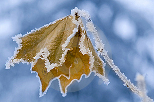 Frozen Leaf. Royalty Free Stock Photography - Image: 7841887