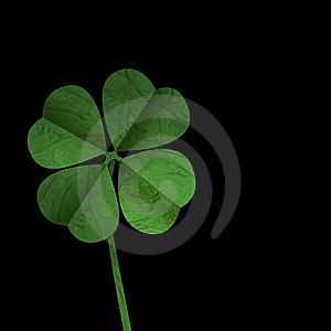 Lucky four leaf clover or shamrock Royalty Free Stock Image