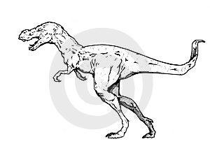Tyrannosaurus Rex Stock Images - Image: 7846854