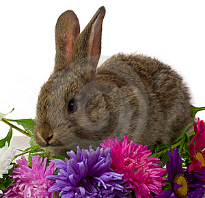 Bunny And Flowers Stock Image - Image: 7847681