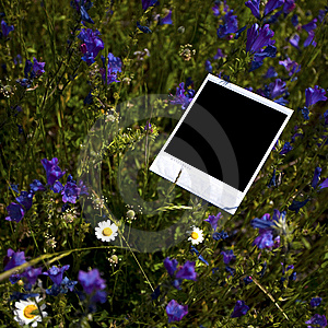 Instant Photo Frame In Grass Background Stock Photo - Image: 7849020
