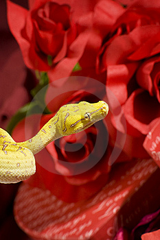 Serpent Dans Les Roses Images stock - Image: 7850244