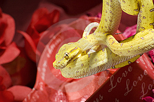 Snake In The Roses Stock Image - Image: 7850301