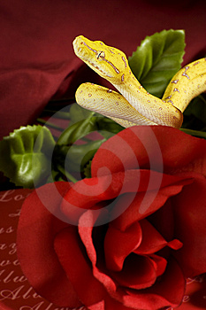 Snake In The Roses Royalty Free Stock Image - Image: 7850326