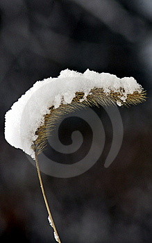 Snow On A Pod Royalty Free Stock Photography - Image: 7851487