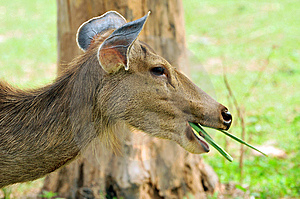 Deer Royalty Free Stock Photos - Image: 7853938