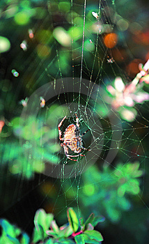 Small Spider In Spider-web With Forest Woods Royalty Free Stock Images - Image: 7854519