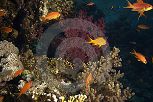 Coral And Fish Stock Photos - Image: 7857513