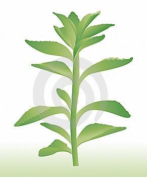 Plant Stock Photo - Image: 7872400