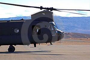 Chinook Nose Stock Photo - Image: 7877390