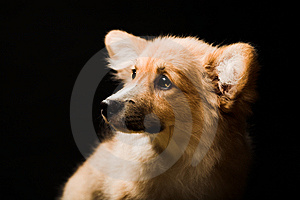 Puppy Royalty Free Stock Photos - Image: 7894178