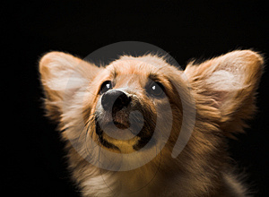Puppy Stock Image - Image: 7894321