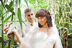 The Walk Of Newlyweds Stock Image - Image: 7895041