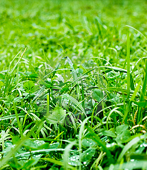Green Grass Stock Image - Image: 7912911