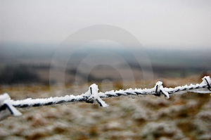 Frozen Barbed Wire Royalty Free Stock Photography - Image: 7918447
