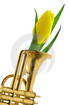 Yellow Tulip In Gold Trumpet Romantic Valentine Stock Images - Image: 7924864
