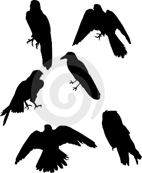 Six Bird Silhouettes Royalty Free Stock Photo - Image: 7925465