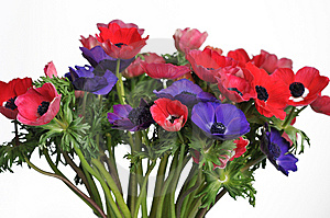 Anemone Bouquet Stock Images - Image: 7930794