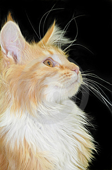 Ginger Cat Royalty Free Stock Image - Image: 7933046