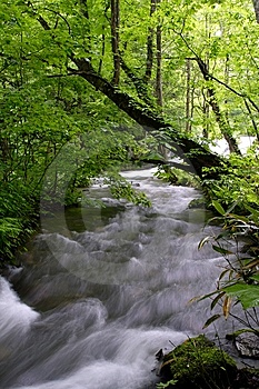Oirase-gawa River Royalty Free Stock Photos - Image: 7934658