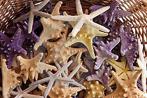 Basket With Starfishes Stock Photo - Image: 7936220