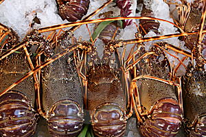 Fresh Lobsters Lie On Ice Royalty Free Stock Photo - Image: 7936325
