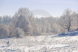 Trees Wrapped With Snow Stock Photography - Image: 7936652