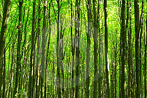 Forest Stock Photography - Image: 7937052