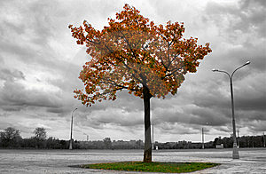 Fiery Tree Stock Photography - Image: 7949022