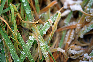 Frozen Drops Royalty Free Stock Photography - Image: 7956037