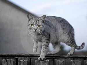 Gray Cat Stock Image - Image: 7957671