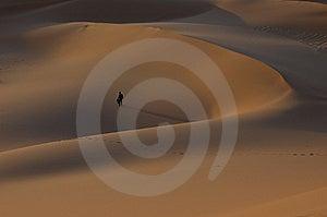Man Alone Dune Desert Sahara Stock Photography - Image: 7958782