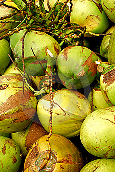 Coconuts Galore Stock Images - Image: 7966544